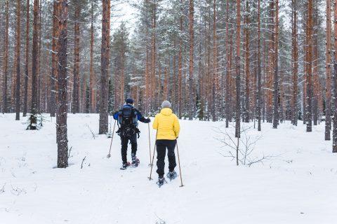 lumikenkäilyä metsässä eräopas ilkka talven johdolla